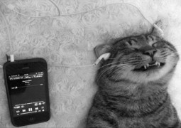 Scientists have made music for cats and they actually love it