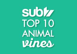 Top 10 Animal Vines!